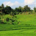 Indahnya panorama desa
